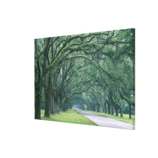North America, U.S.A., Georgia, Savannah, Gallery Wrapped Canvas