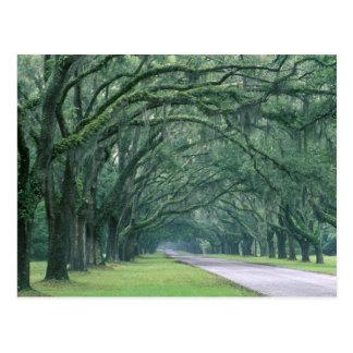 North America, U.S.A., Georgia, Savannah, Postcard