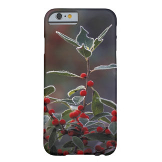 North America, United States, New England. Holly 2 Barely There iPhone 6 Case