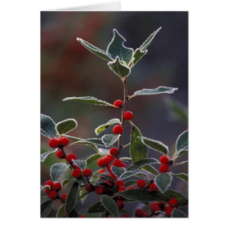 North America, United States, New England. Holly 2 Card