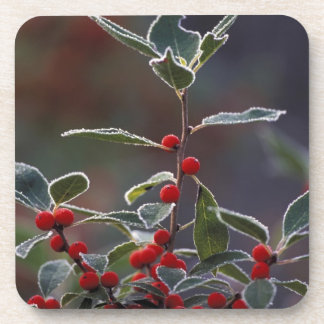 North America, United States, New England. Holly 2 Coaster