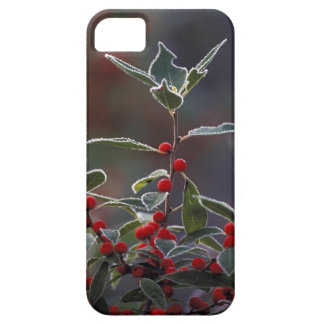 North America, United States, New England. Holly 2 iPhone 5 Covers