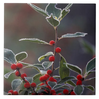 North America, United States, New England. Holly 2 Tile