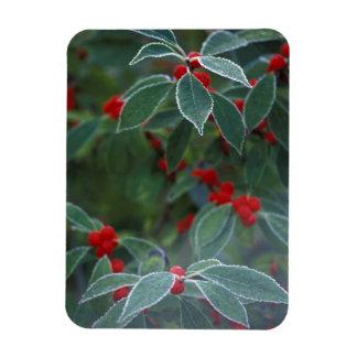 North America, United States, New England. Holly Rectangular Photo Magnet