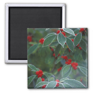 North America, United States, New England. Holly Square Magnet