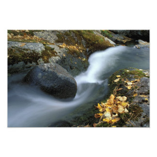 North America, US, ME, A stream in fall. Photo Print