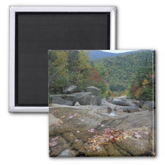 North America, US, NH, Fall foliage in New Magnet
