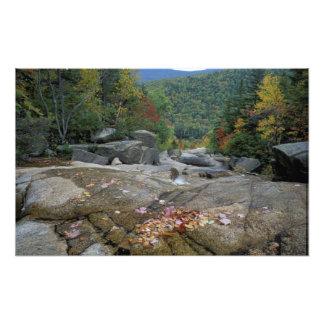 North America US NH Fall foliage in New Photograph