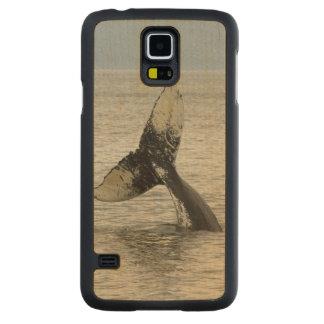 North America, USA, AK, Inside Passage. Humpback Carved Maple Galaxy S5 Case
