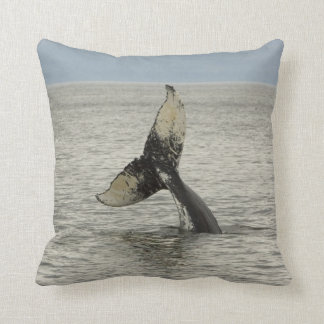 North America, USA, AK, Inside Passage. Humpback Cushion