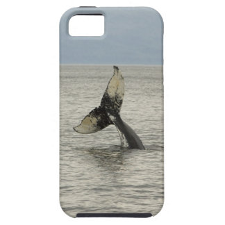North America, USA, AK, Inside Passage. Humpback iPhone 5 Covers