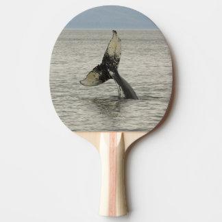 North America, USA, AK, Inside Passage. Humpback Ping Pong Paddle
