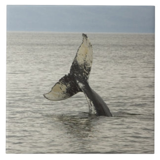 North America, USA, AK, Inside Passage. Humpback Tile