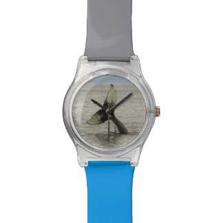 North America, USA, AK, Inside Passage. Humpback Wrist Watches