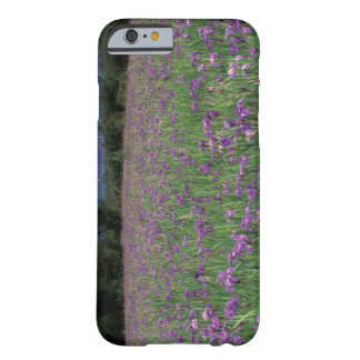 North America, USA, Alaska, Anchorage, Eklutna Barely There iPhone 6 Case