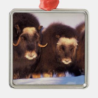 North America, USA, Alaska, Arctic Circle, Christmas Ornament