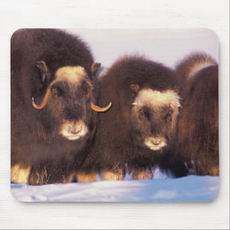 North America, USA, Alaska, Arctic Circle, Mouse Mat
