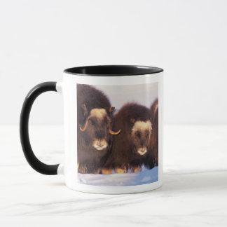 North America, USA, Alaska, Arctic Circle, Mug