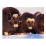 North America, USA, Alaska, Arctic Circle, Postcards