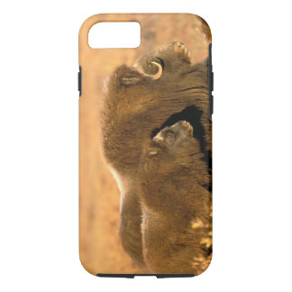 North America, USA, Alaska, Arctic National iPhone 8/7 Case