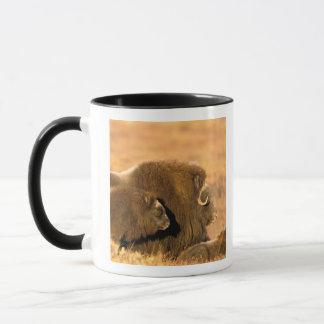 North America, USA, Alaska, Arctic National Mug