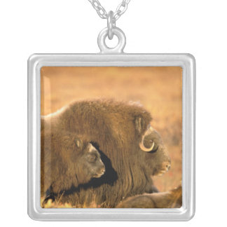 North America, USA, Alaska, Arctic National Silver Plated Necklace