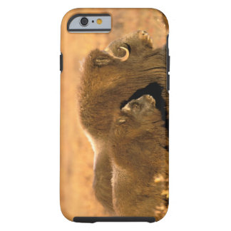 North America, USA, Alaska, Arctic National Tough iPhone 6 Case
