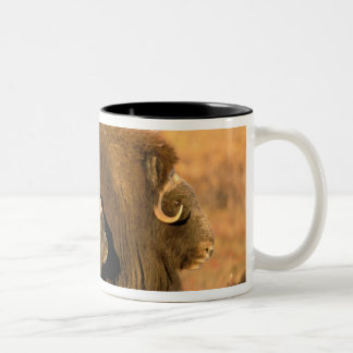 North America, USA, Alaska, Arctic National Two-Tone Coffee Mug