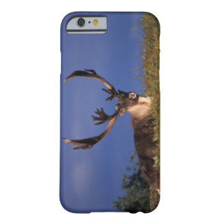 North America, USA, Alaska, Denali National Barely There iPhone 6 Case