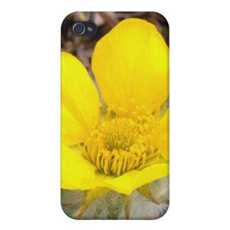North America, USA, Alaska, Denali National iPhone 4/4S Covers