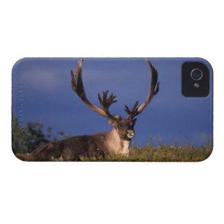 North America, USA, Alaska, Denali National iPhone 4 Cover