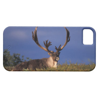 North America, USA, Alaska, Denali National iPhone 5 Cover