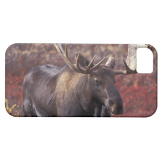 North America, USA, Alaska, Denali NP. Alces iPhone 5 Covers