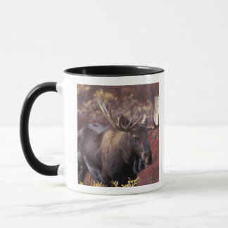 North America, USA, Alaska, Denali NP. Alces Mug