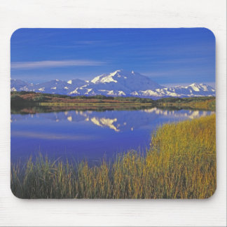 North America, USA, Alaska, Denali NP, Mouse Mat