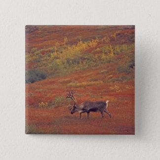 North America, USA, Alaska, Denali NP, Tundra. 15 Cm Square Badge