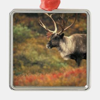 North America, USA, Alaska, Denali NP, Tundra. Christmas Ornament