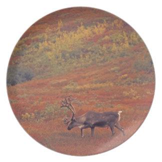 North America, USA, Alaska, Denali NP, Tundra. Plate