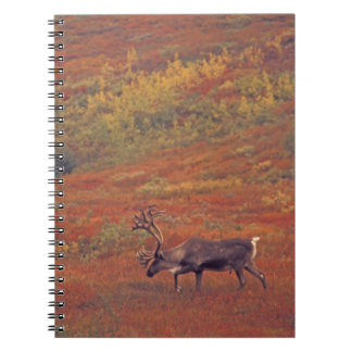 North America, USA, Alaska, Denali NP, Tundra. Spiral Notebook