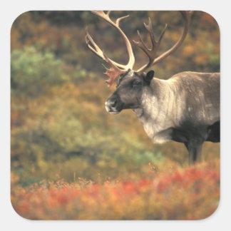 North America, USA, Alaska, Denali NP, Tundra. Square Sticker