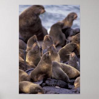 North America, USA, Alaska. Endangered Poster