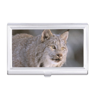 North America, USA, Alaska, Haines. Lynx (Felis 2 Business Card Holder
