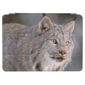 North America, USA, Alaska, Haines. Lynx (Felis 2 iPad Air Cover