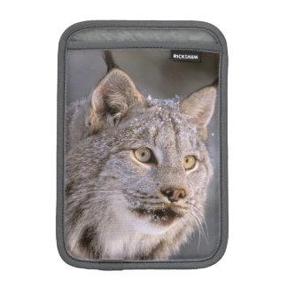 North America, USA, Alaska, Haines. Lynx (Felis 2 iPad Mini Sleeve