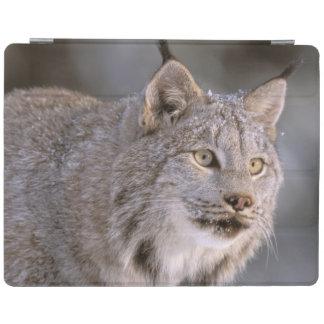 North America, USA, Alaska, Haines. Lynx (Felis 2 iPad Smart Cover
