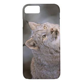 North America, USA, Alaska, Haines. Lynx (Felis 2 iPhone 8/7 Case