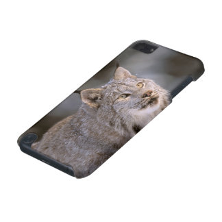 North America, USA, Alaska, Haines. Lynx (Felis 2 iPod Touch (5th Generation) Cover