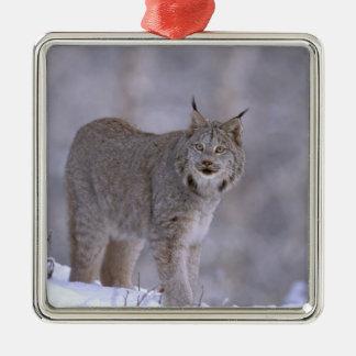 North America, USA, Alaska, Haines. Lynx (Felis Christmas Ornament