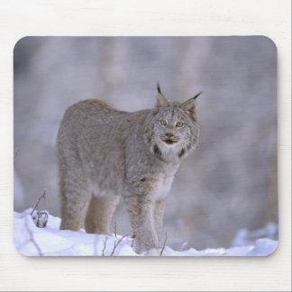 North America, USA, Alaska, Haines. Lynx (Felis Mouse Mat