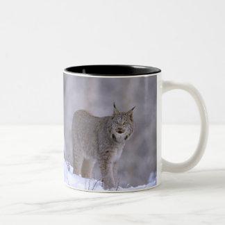 North America, USA, Alaska, Haines. Lynx (Felis Two-Tone Coffee Mug